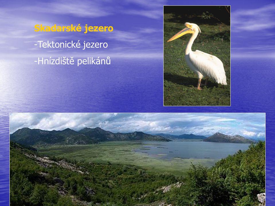 Skadarské jezero Tektonické jezero Hnízdiště pelikánů