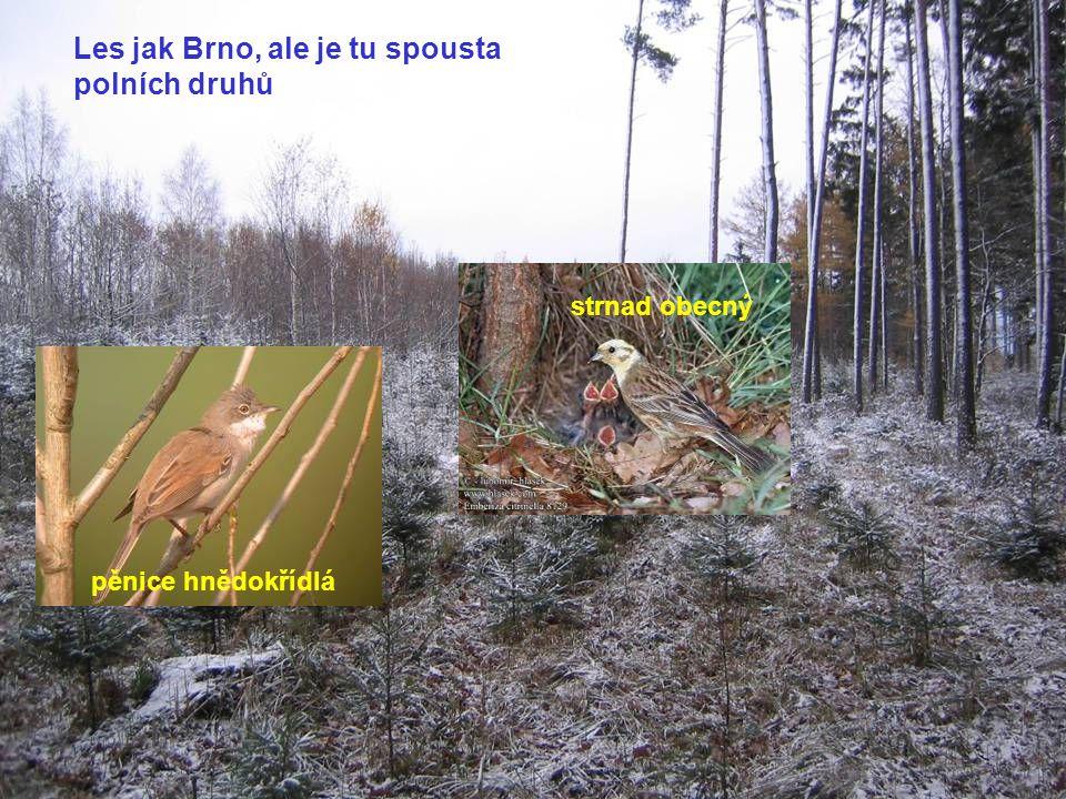 Les jak Brno, ale je tu spousta polních druhů