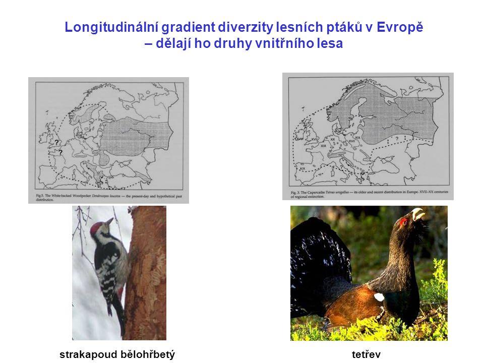 Longitudinální gradient diverzity lesních ptáků v Evropě – dělají ho druhy vnitřního lesa