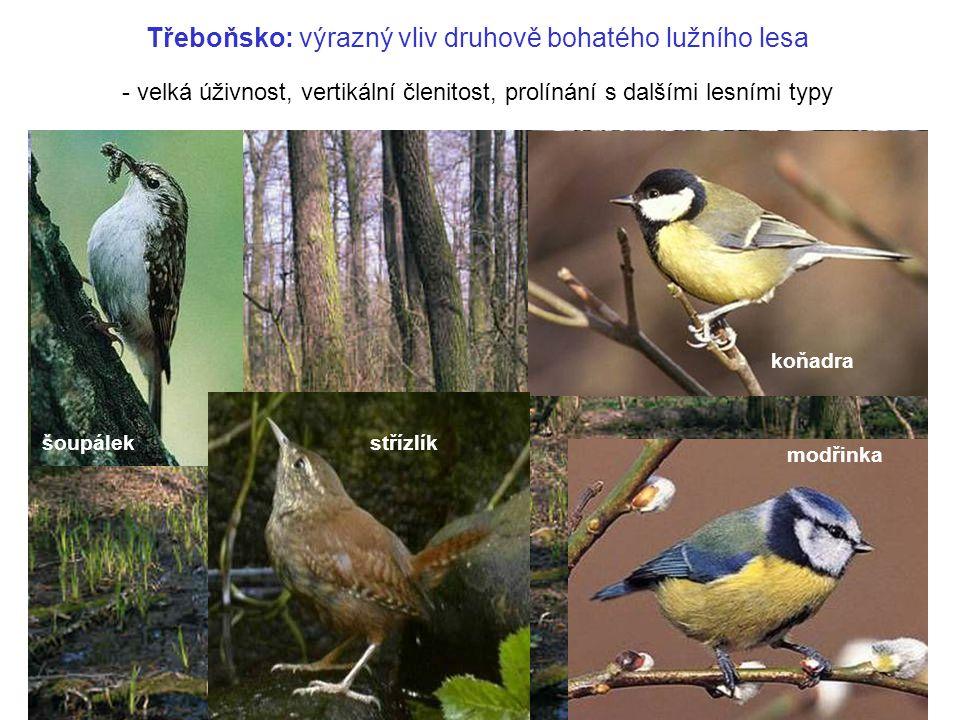 Třeboňsko: výrazný vliv druhově bohatého lužního lesa