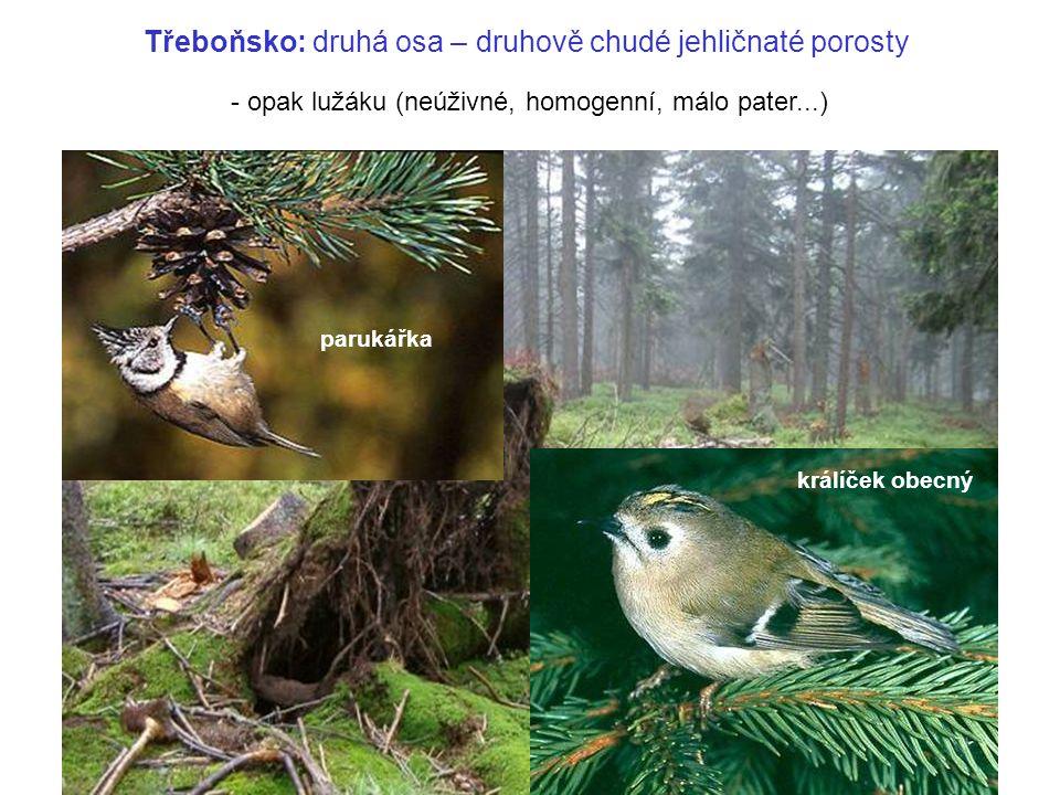 Třeboňsko: druhá osa – druhově chudé jehličnaté porosty