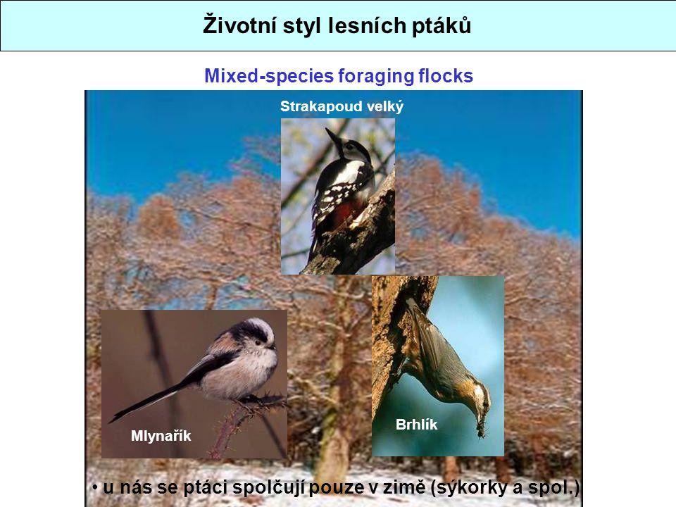 Životní styl lesních ptáků