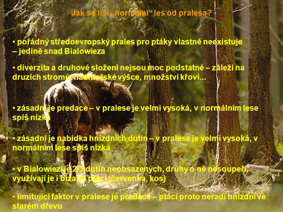 """Jak se liší """"normální les od pralesa"""