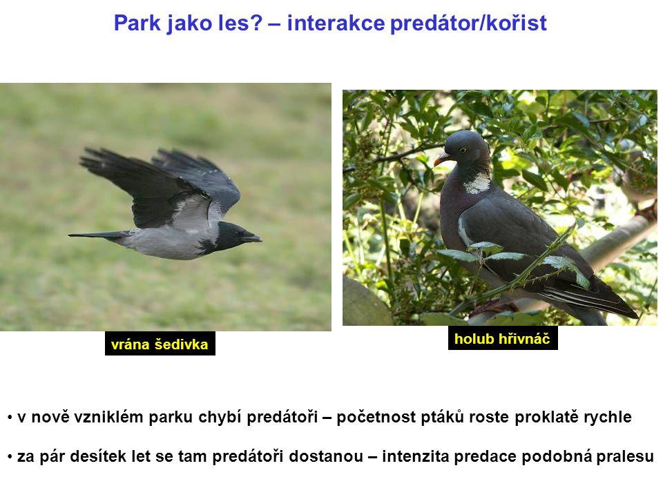 Park jako les – interakce predátor/kořist