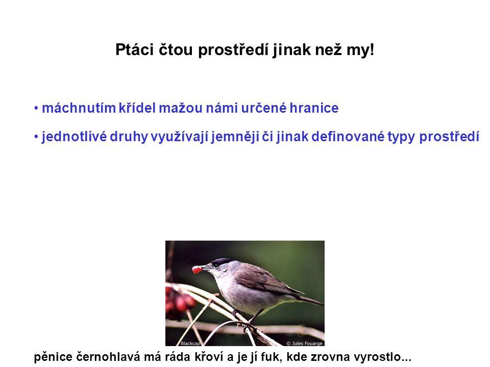 Ptáci čtou prostředí jinak než my!