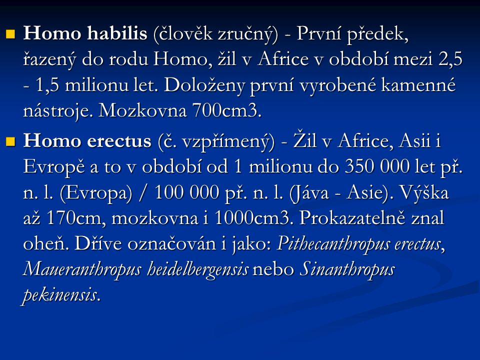 Homo habilis (člověk zručný) - První předek, řazený do rodu Homo, žil v Africe v období mezi 2,5 - 1,5 milionu let. Doloženy první vyrobené kamenné nástroje. Mozkovna 700cm3.