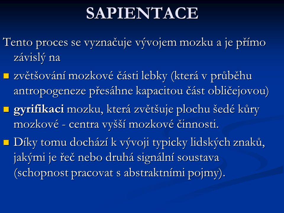 SAPIENTACE Tento proces se vyznačuje vývojem mozku a je přímo závislý na.