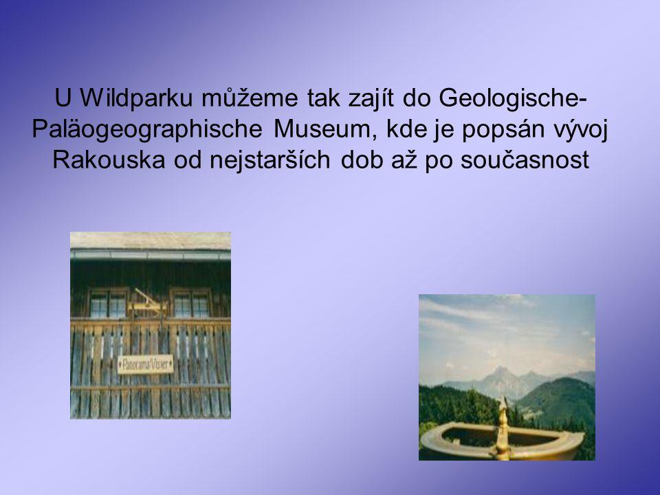 U Wildparku můžeme tak zajít do Geologische-Paläogeographische Museum, kde je popsán vývoj Rakouska od nejstarších dob až po současnost