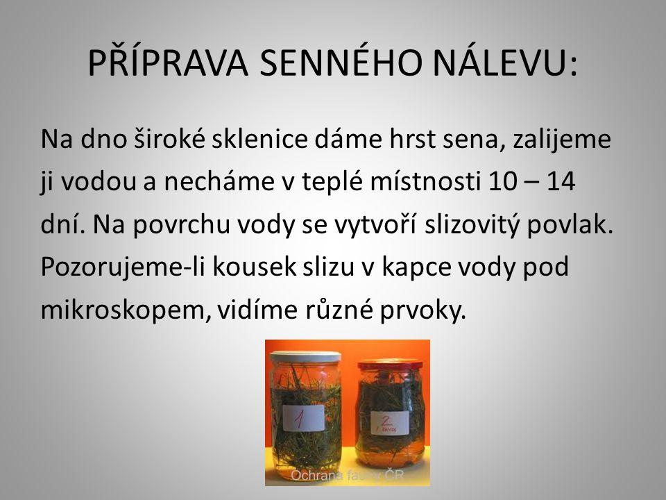 PŘÍPRAVA SENNÉHO NÁLEVU:
