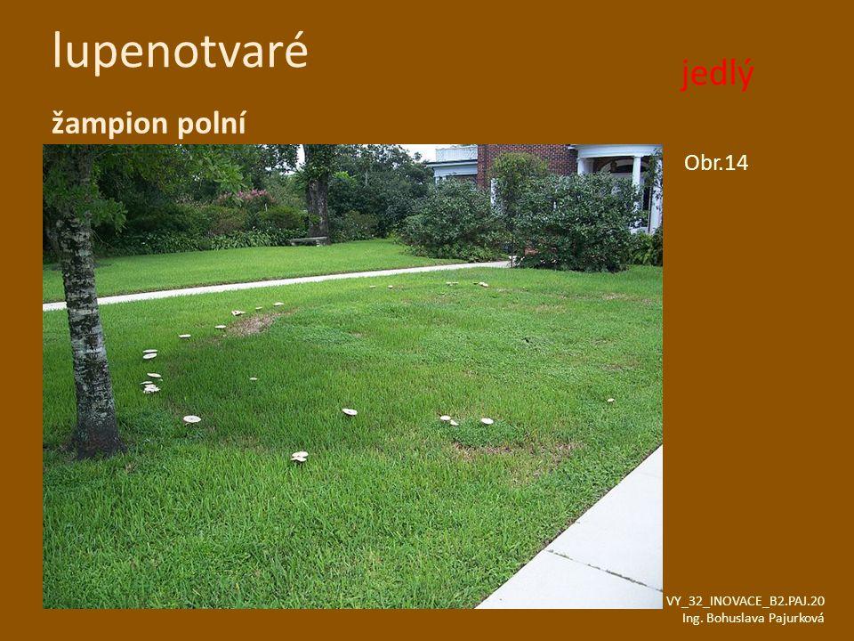 lupenotvaré žampion polní Obr.14 VY_32_INOVACE_B2.PAJ.20