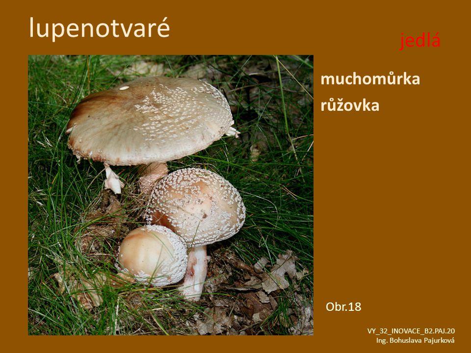 lupenotvaré jedlá muchomůrka růžovka Obr.18 VY_32_INOVACE_B2.PAJ.20