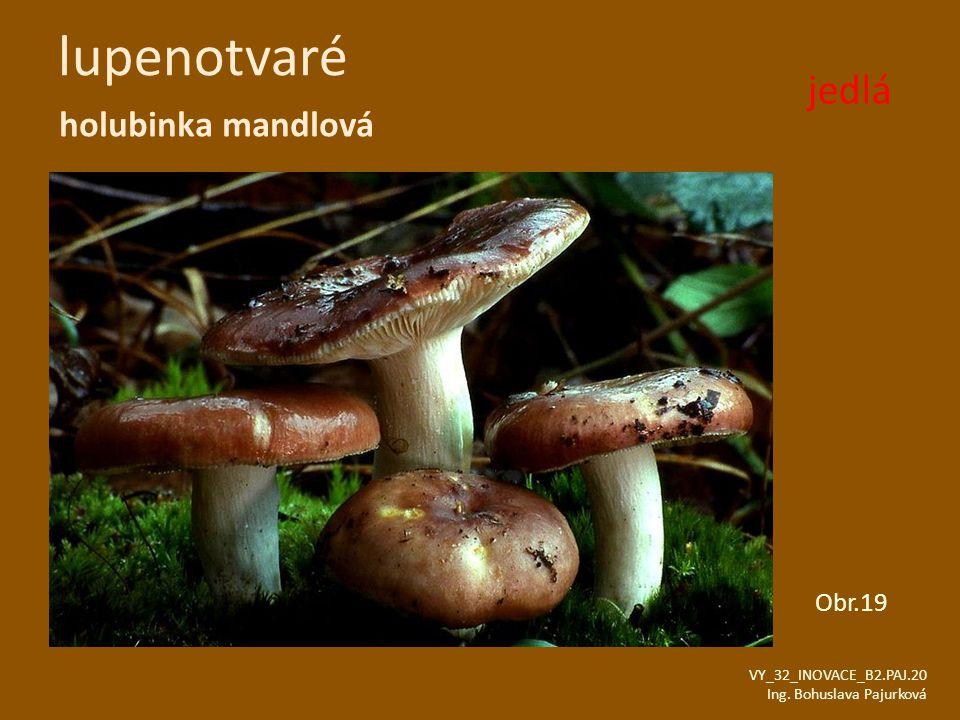 lupenotvaré jedlá holubinka mandlová Obr.19 VY_32_INOVACE_B2.PAJ.20
