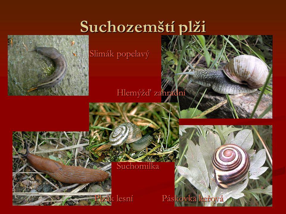 Suchozemští plži Slimák popelavý Hlemýžď zahradní Suchomilka