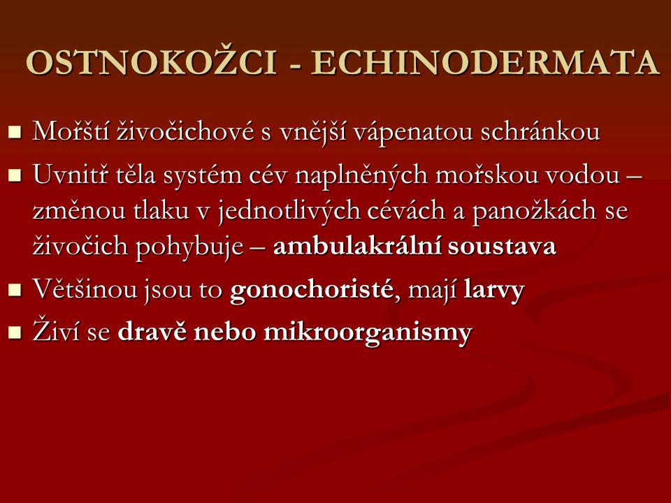 OSTNOKOŽCI - ECHINODERMATA