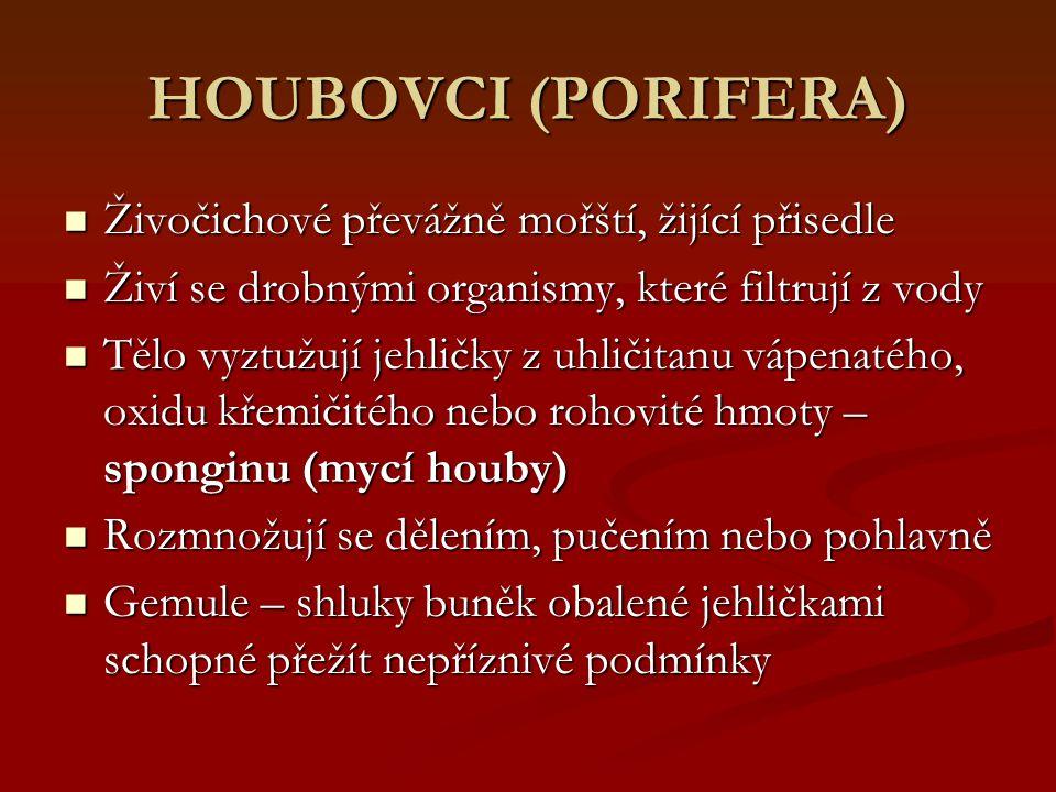 HOUBOVCI (PORIFERA) Živočichové převážně mořští, žijící přisedle