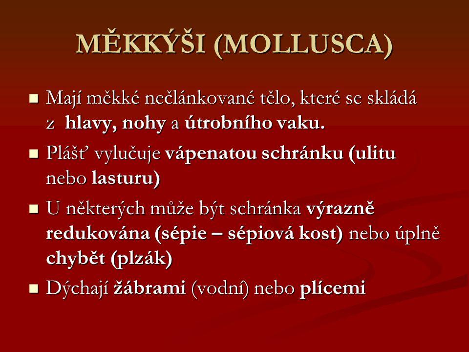 MĚKKÝŠI (MOLLUSCA) Mají měkké nečlánkované tělo, které se skládá z hlavy, nohy a útrobního vaku.