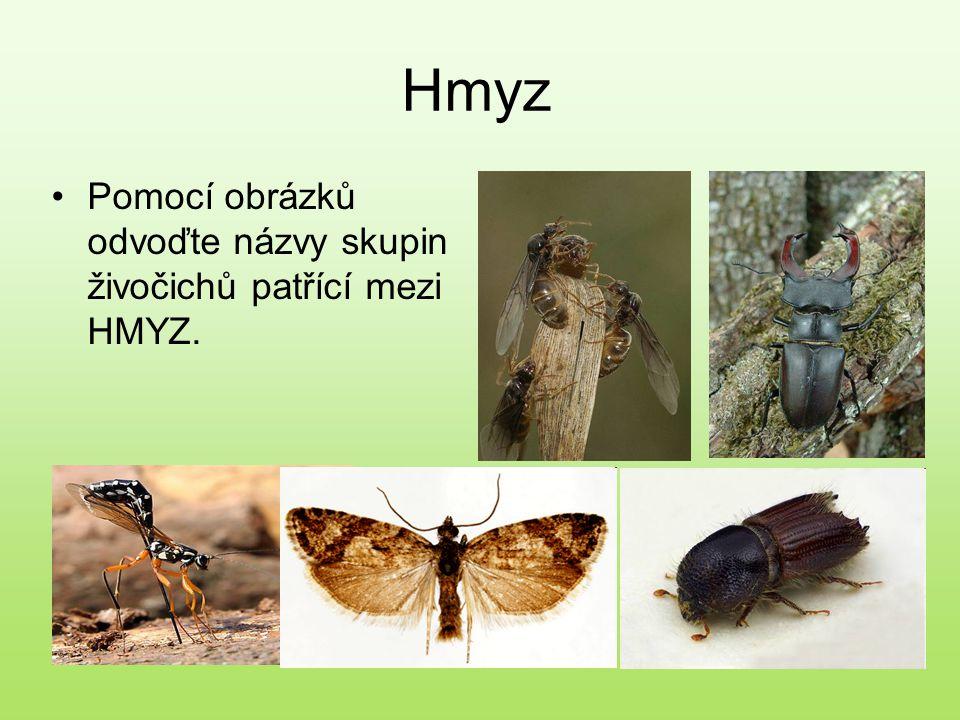 Hmyz Pomocí obrázků odvoďte názvy skupin živočichů patřící mezi HMYZ.