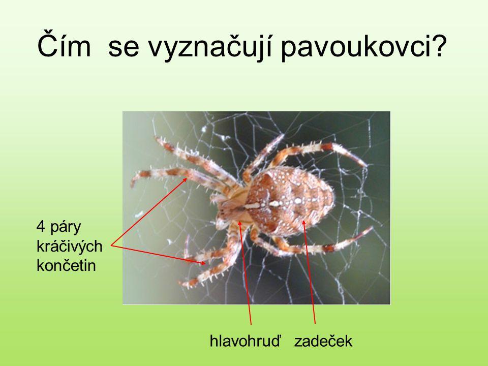 Čím se vyznačují pavoukovci