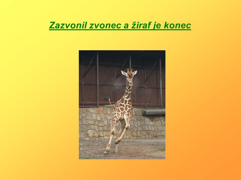 Zazvonil zvonec a žiraf je konec