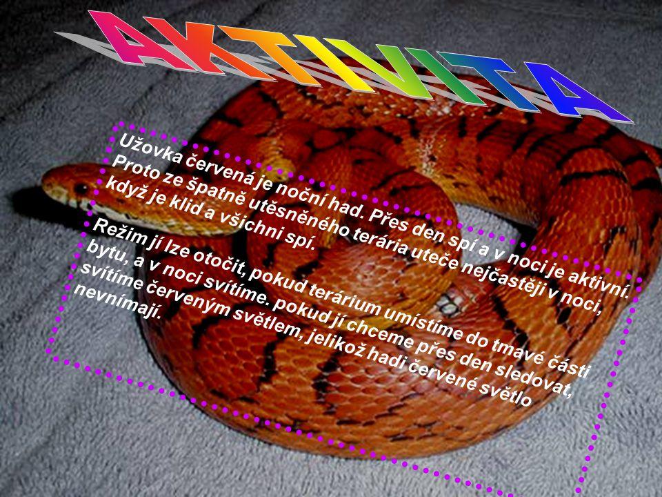 AKTIVITA Užovka červená je noční had. Přes den spí a v noci je aktivní.