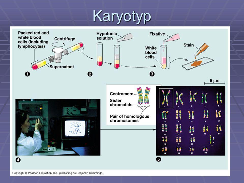 Karyotyp