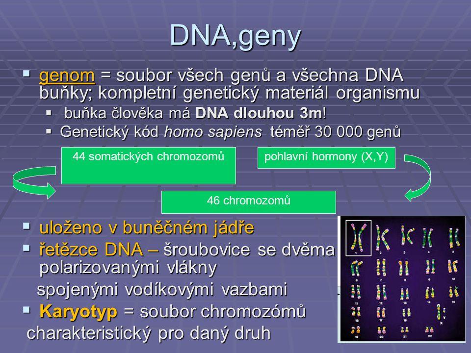 44 somatických chromozomů