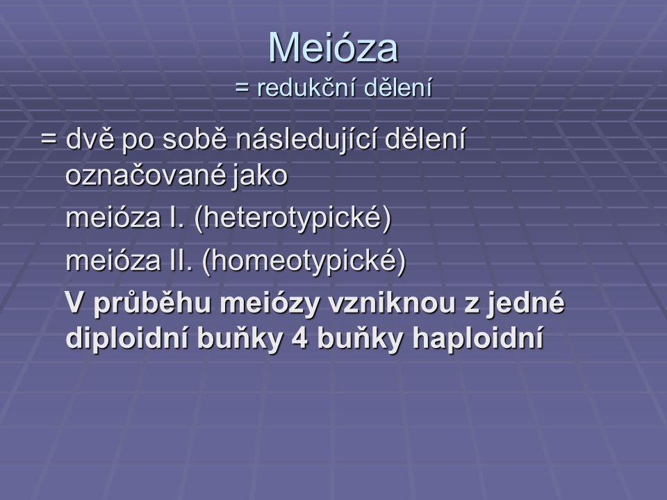 Meióza = redukční dělení