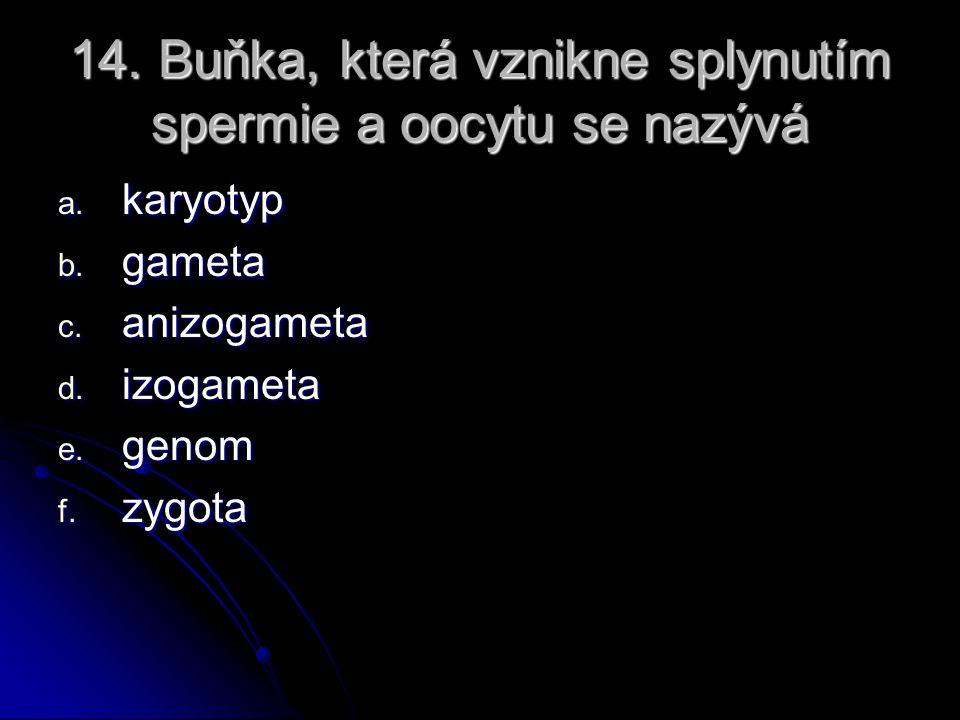 14. Buňka, která vznikne splynutím spermie a oocytu se nazývá