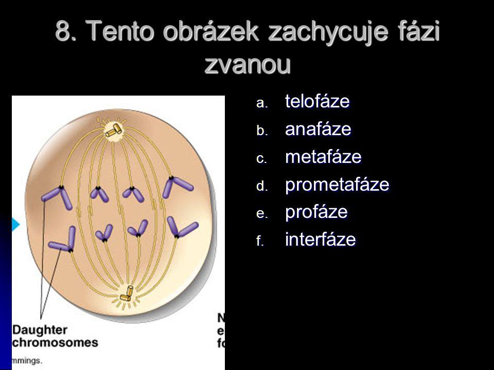 8. Tento obrázek zachycuje fázi zvanou