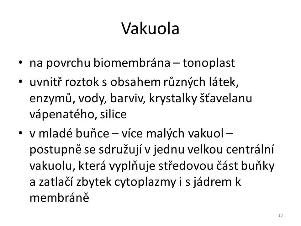 Vakuola na povrchu biomembrána – tonoplast