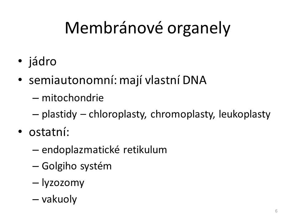 Membránové organely jádro semiautonomní: mají vlastní DNA ostatní: