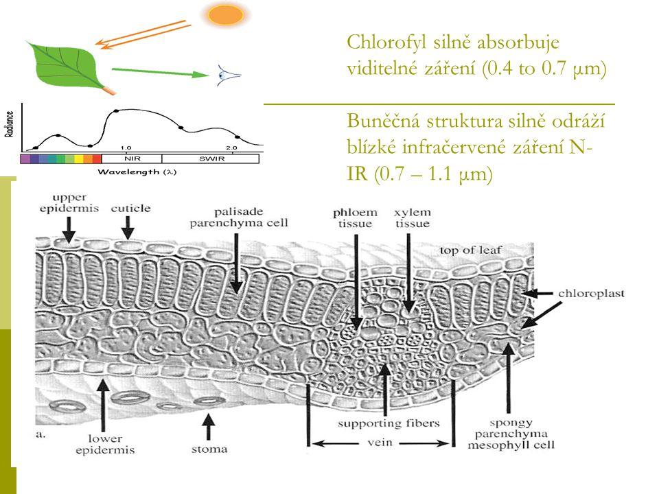 Chlorofyl silně absorbuje viditelné záření (0. 4 to 0