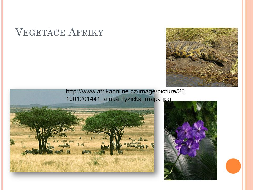 Vegetace Afriky http://www.afrikaonline.cz/image/picture/201001201441_afrika_fyzicka_mapa.jpg