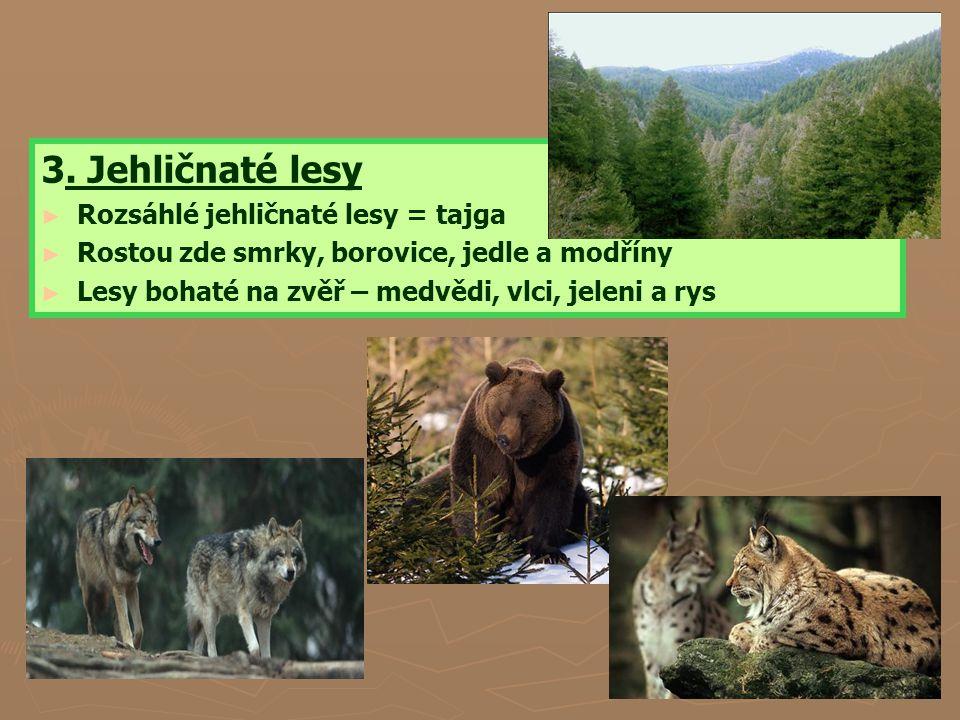 3. Jehličnaté lesy Rozsáhlé jehličnaté lesy = tajga