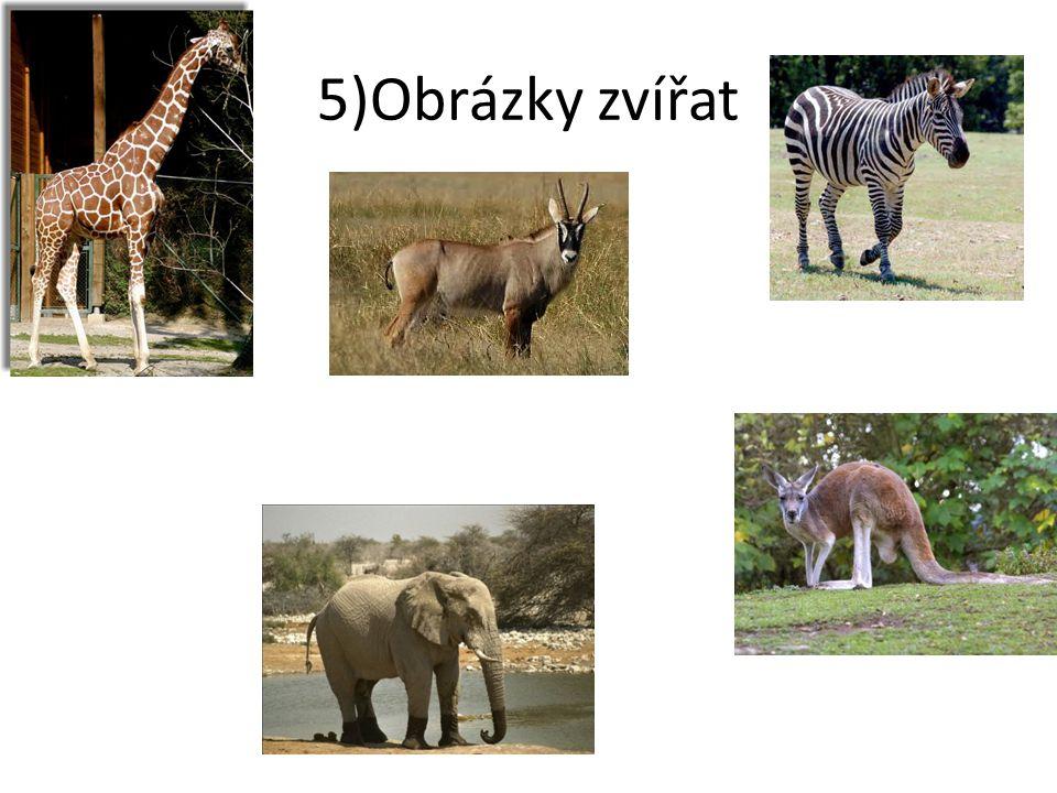 5)Obrázky zvířat