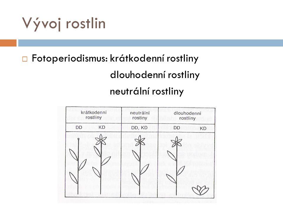 Vývoj rostlin Fotoperiodismus: krátkodenní rostliny