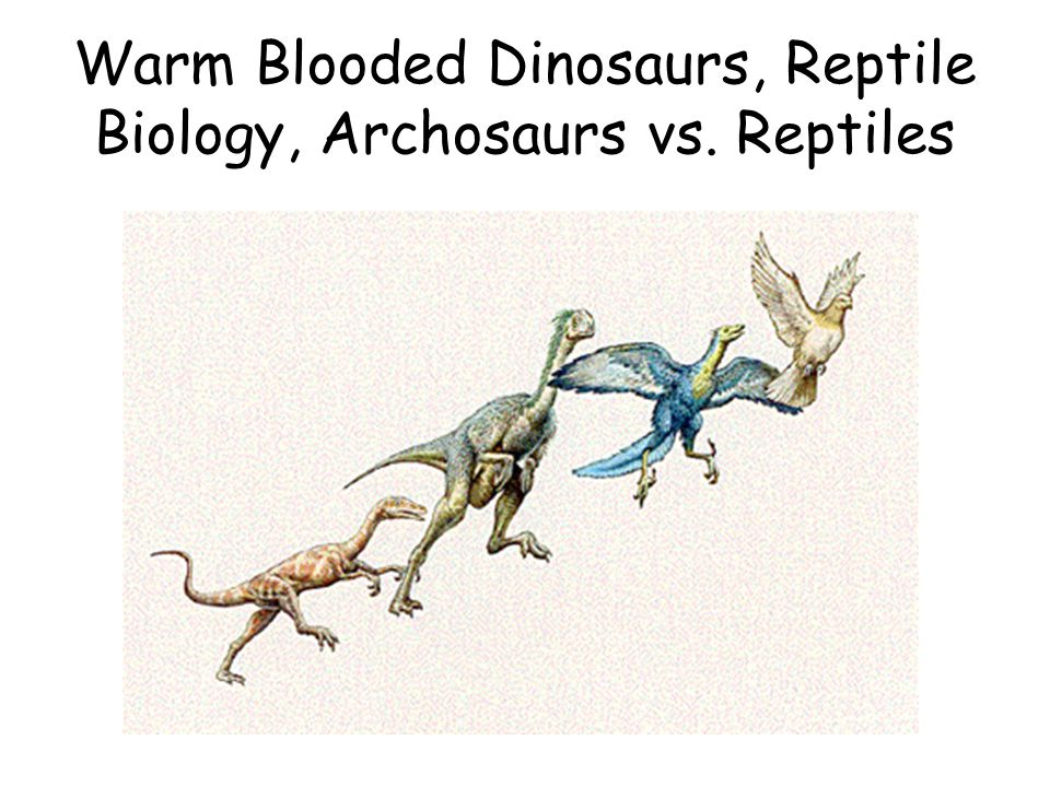 Warm Blooded Dinosaurs, Reptile Biology, Archosaurs vs. Reptiles