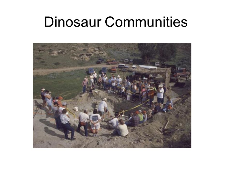 Dinosaur Communities