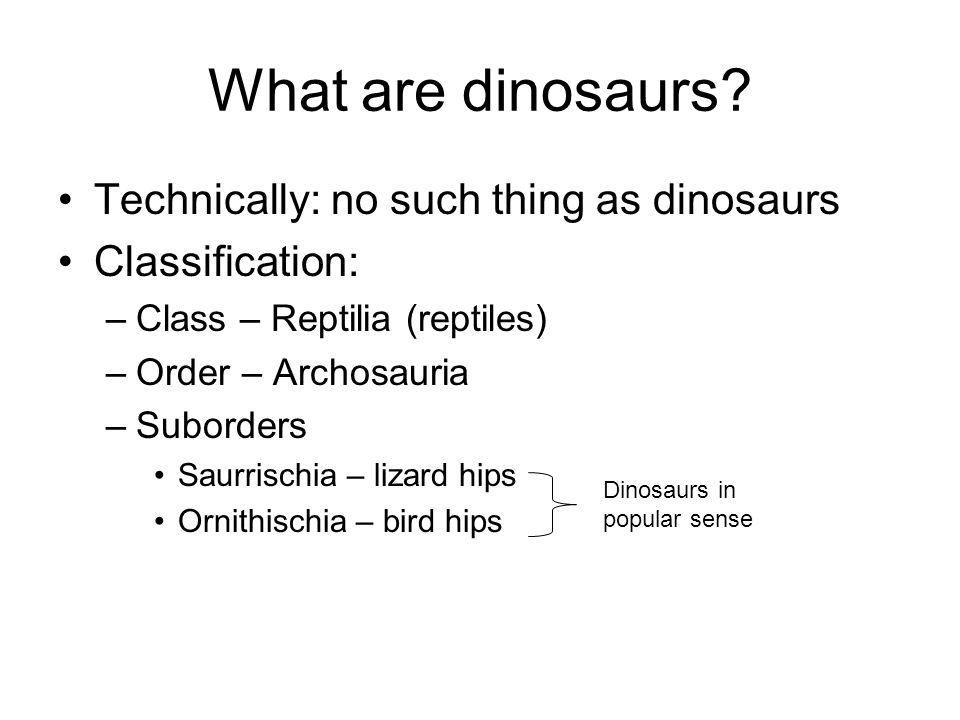 What are dinosaurs Technically: no such thing as dinosaurs