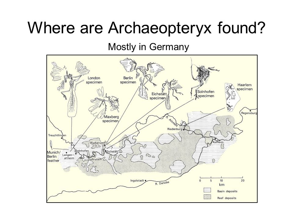 Where are Archaeopteryx found