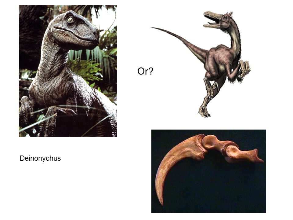 Or Deinonychus