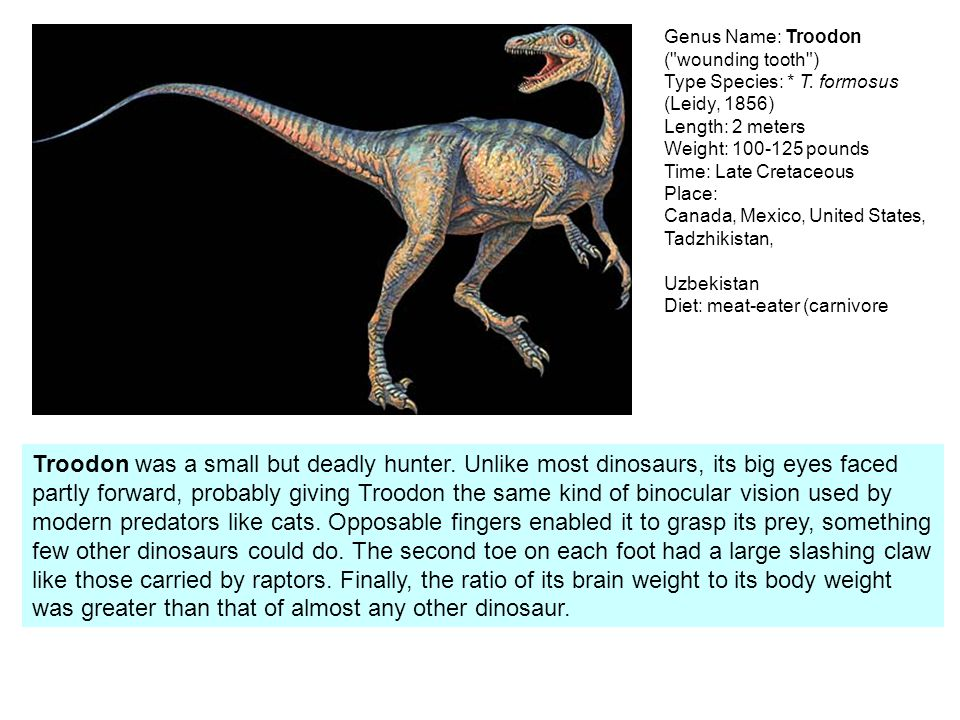 Genus Name: Troodon ( wounding tooth ) Type Species:. T
