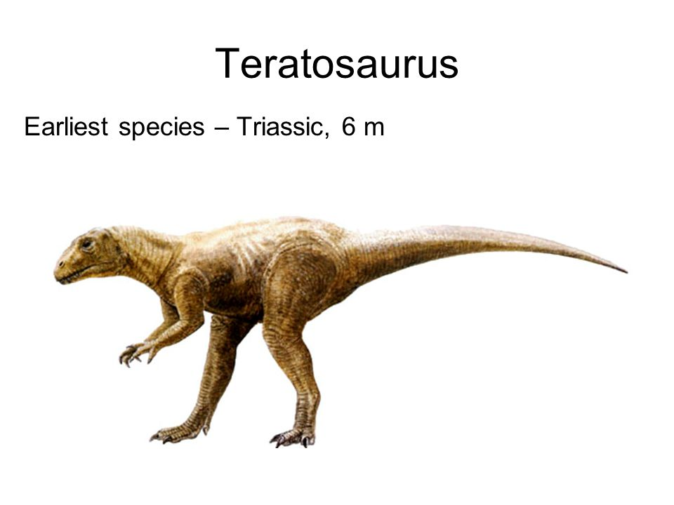 Teratosaurus Earliest species – Triassic, 6 m