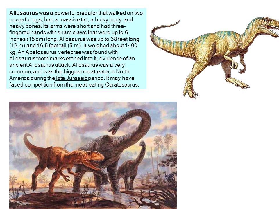 Allosaurus was a powerful predator that walked on two powerful legs, had a massive tail, a bulky body, and heavy bones.