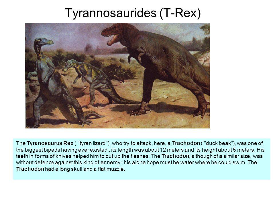Tyrannosaurides (T-Rex)