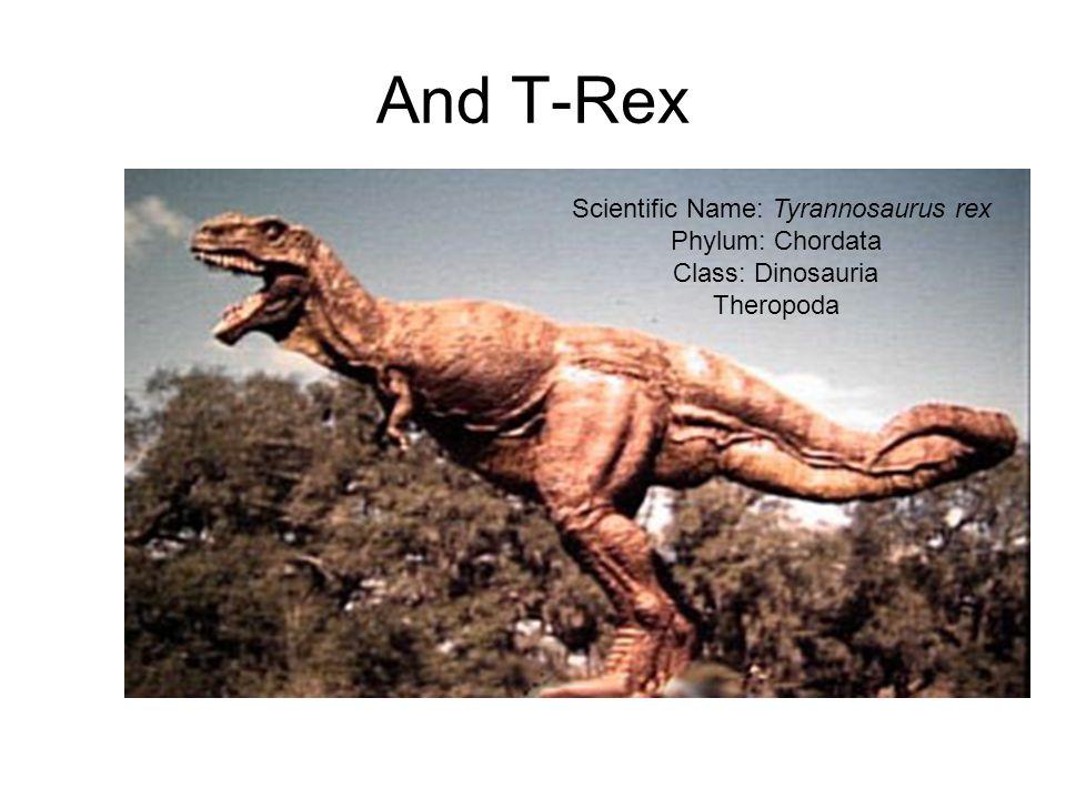 Scientific Name: Tyrannosaurus rex