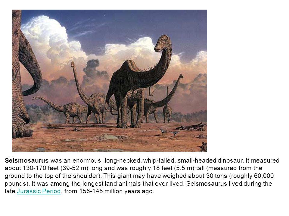 Seismosaurus was an enormous, long-necked, whip-tailed, small-headed dinosaur.