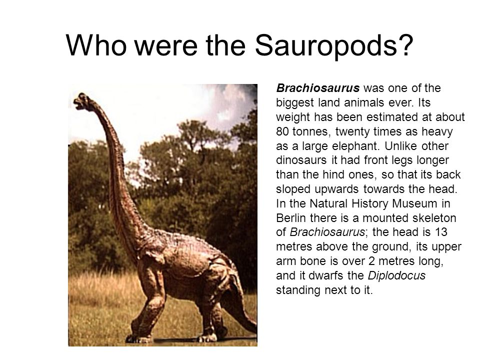 Who were the Sauropods