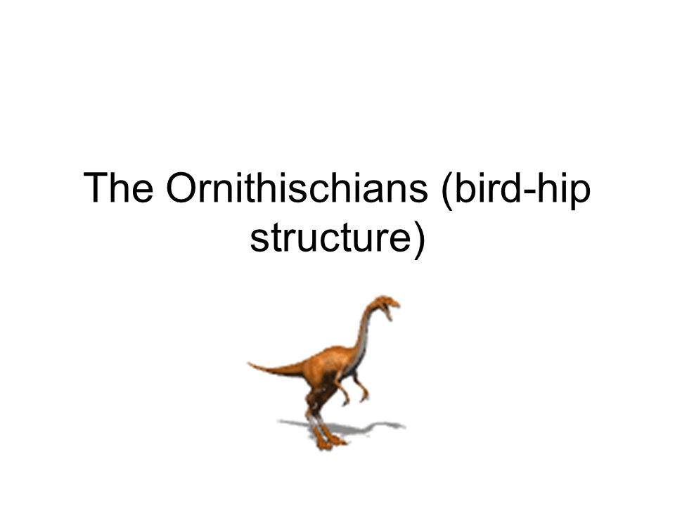 The Ornithischians (bird-hip structure)