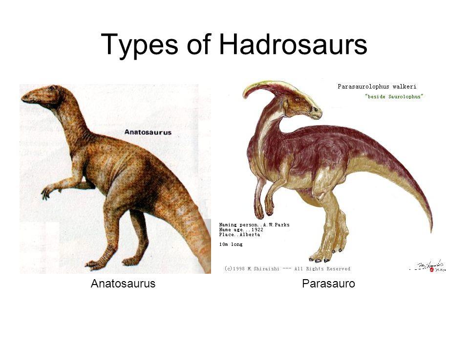 Types of Hadrosaurs Anatosaurus Parasauro